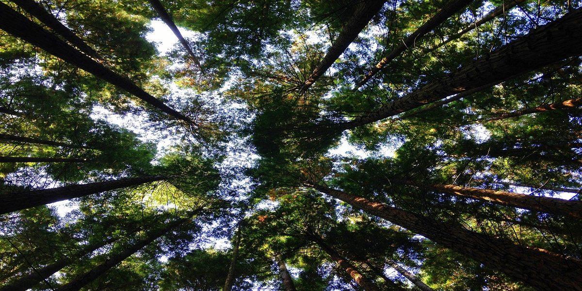 BLOG: Carol Dunbar outlines our work to tackle environmental concerns